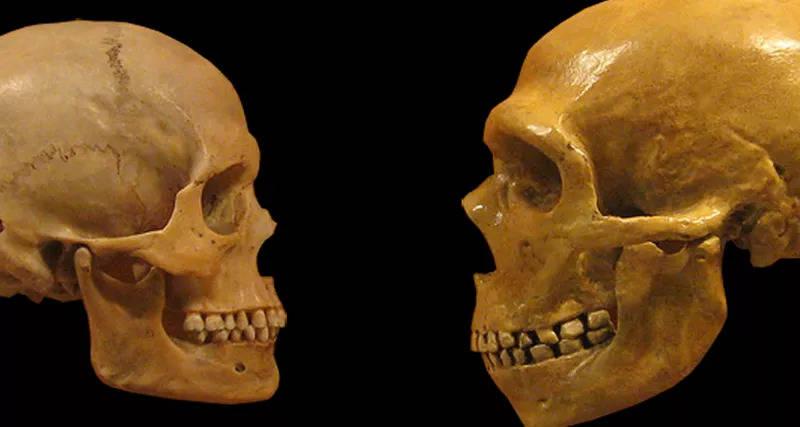 Y-хромосому неандертальцы получили от современного человека.