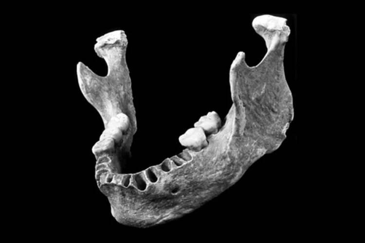 челюсть потомка неандертальца