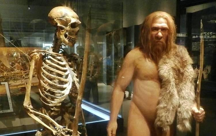 люди и неандертальцы