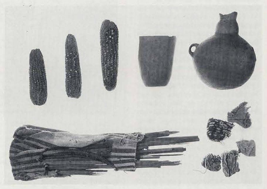 кукуруза археологические находки