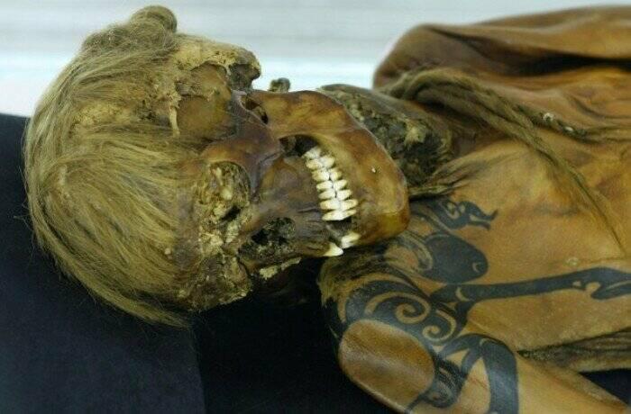 Изображение шрифона на татуировке алтайской принцессы.