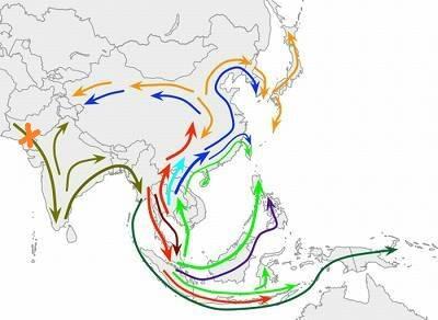 миграции в Азии