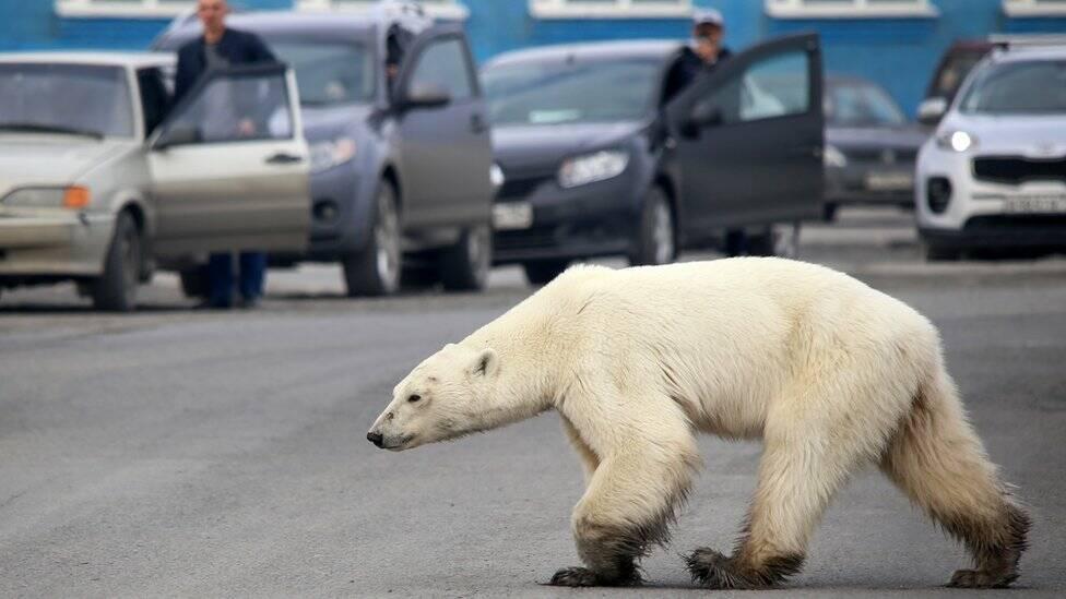 Бороться с глобальным потеплением Европа может, только наращивая сжигание газа.
